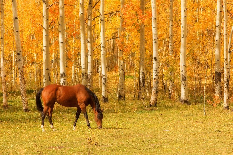 Caballo otoño
