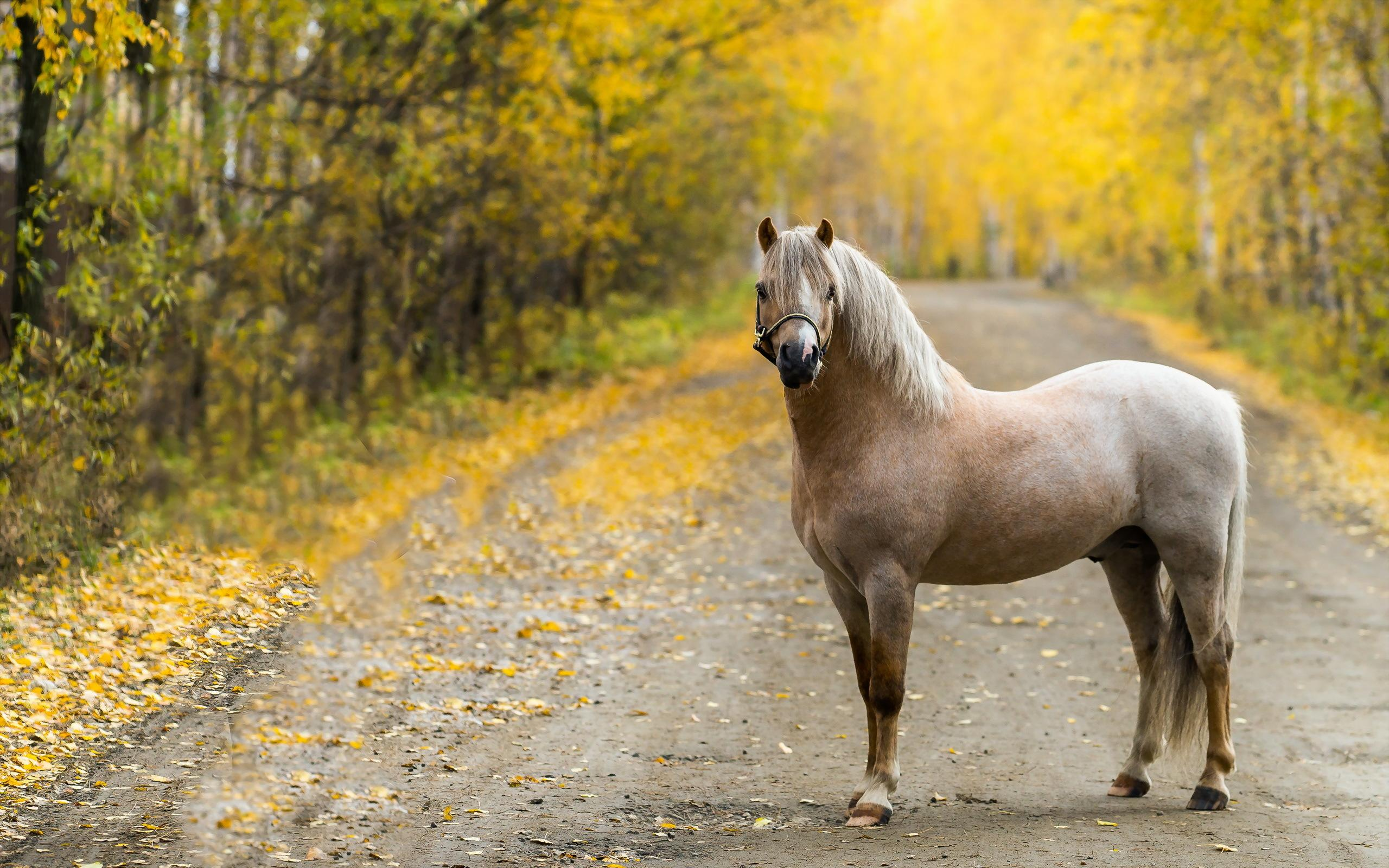 spring wild horse wallpaper - photo #9